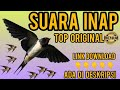 Suara Walet Suara Inap Top Suara Original Suara Inap Walet Top   Mp3 - Mp4 Download