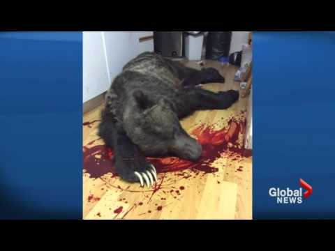 Thumbnail: Man shoots grizzly bear that broke into his home [Canada]