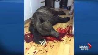 man shoots grizzly bear that broke into his home canada