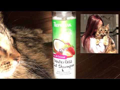 WATERLESS CAT SHAMPOO | REVIEW