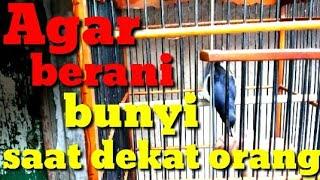 Gambar cover CARA MENGATASI BURUNG TAKUT BUNYI BILA ADA ORANG..parf 1