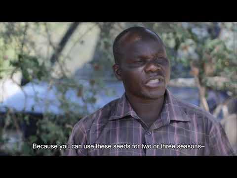 SWISSAID - Mbegu za Uhuru