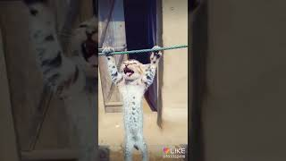 😁😂😁my Litel Cat Tik Tok Video😁😁😂😂😁😁