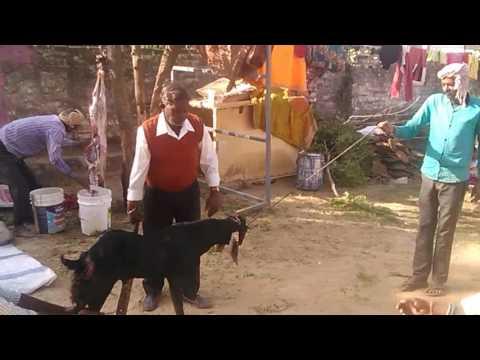 Dhanka Royel bheru Ji mehraj Jheteka Bekera(1)