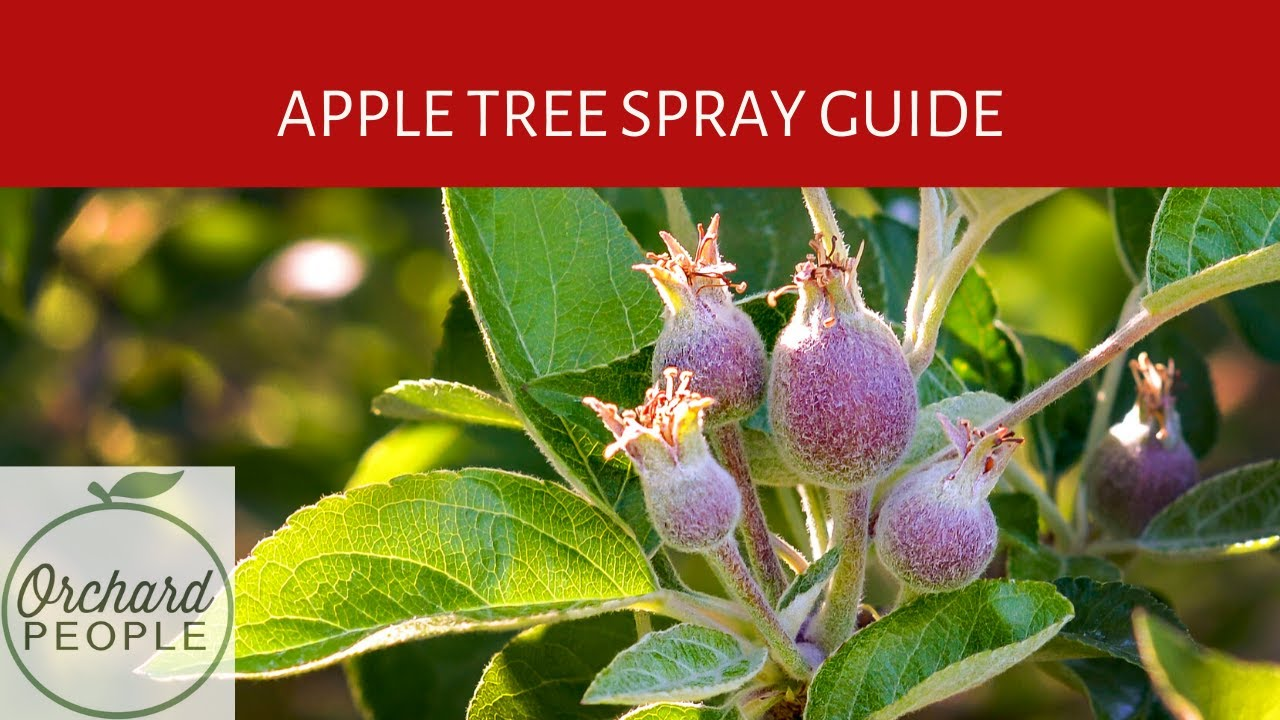 organic fruit tree spray schedules and apple tree spray
