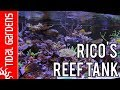 Taking a look at Rico s Reef Tank 300 gallon SPS Dominated Reef