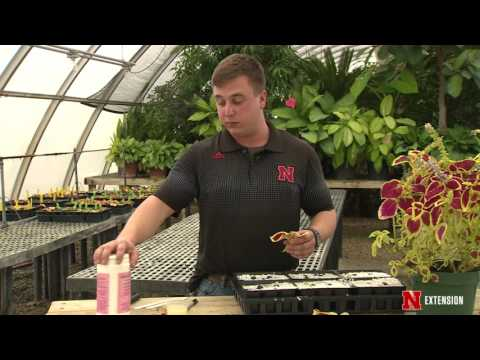 Backyard Farmer Presents: Lifestyle Gardening 406