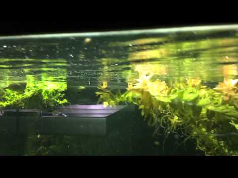 Easy Way To Remove Bio-film From Water Surface