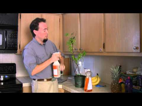 How to Get Rid of Bugs on Plants Using Home Remedies