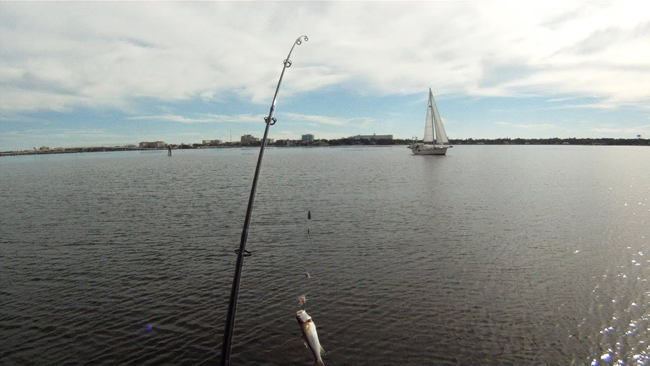 Florida drift fishing for trout and whiting from my for Whiting fish florida
