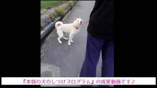 http://dog-life-bic.biz/book/ ←犬のしつけ方の解説はこちらをクリック...
