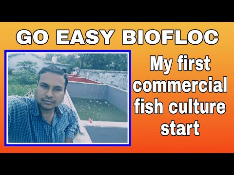 MY FIRST COMMERCIAL FISH FARM START