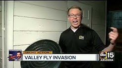 Fly invasion: Valley pest services seeing increase in fly calls