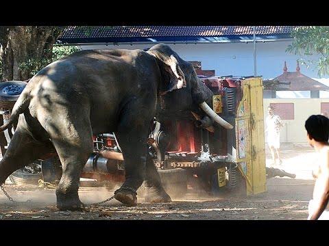 Elephant attack in Kerala 2017   Elephant attack - YouTube  Kerala Elephant Attack Youtube