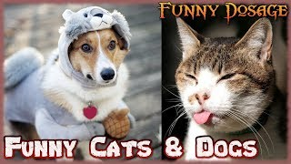 Funny Cats, Dogs & other animals