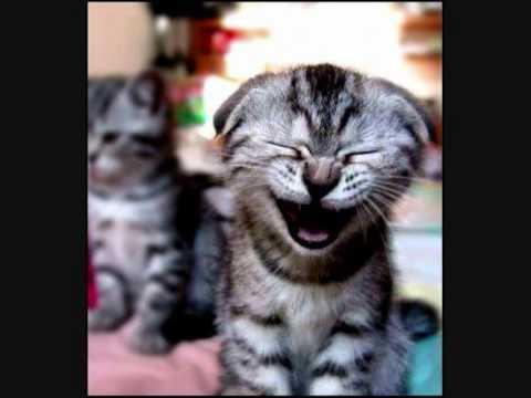 Rayden - Sastre de sonrisas (VIDEOCLIP)