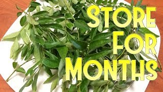 How to Store Curry Leaves For Months