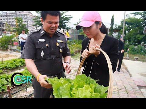 CSR TV 21/12/57 : สน.บางมด ตามรอยเท้าพ่อทำโครงการวิถีพอเพียง ปลูกผักกินเอง