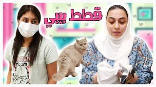 قطتنا توتي ولدت يا ليل 😂 - عائلة عدنان
