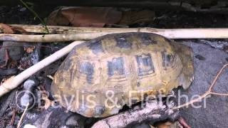 Remains of an Elongated tortoise, Cambodia, 20110430_132236.mp4