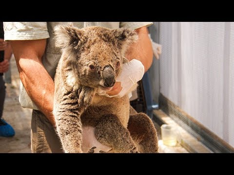 video: Australia fires: The numbers that highlight sheer scale of unfolding catastrophe