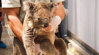 half-a-billion-animals-and-plants-killed-as-wildfires-rage-across-australia