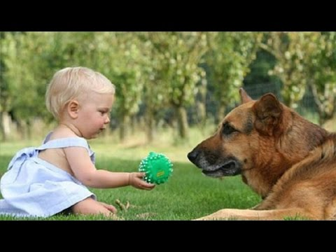 Dogs and babies playing together – Cute compilation