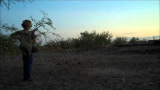 Kolton Seminole Texas Dove Hunt