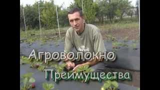 Агроволокно(Почему всё же при мульчировании почвы я дополнительно применяю агроволокно (спанбонд). Смотрите видео и..., 2013-04-09T18:09:09.000Z)