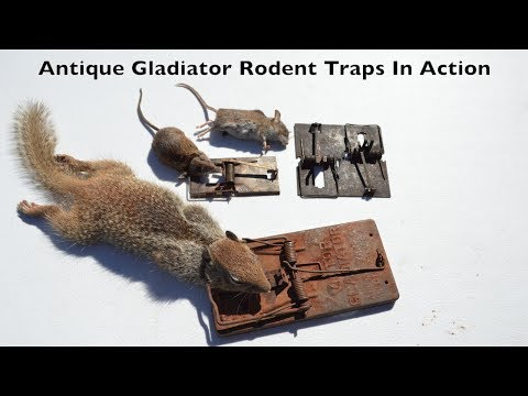 GLADIATORS VS. RODENTS. Antique Gladiator Rat/Mouse Traps In Action.
