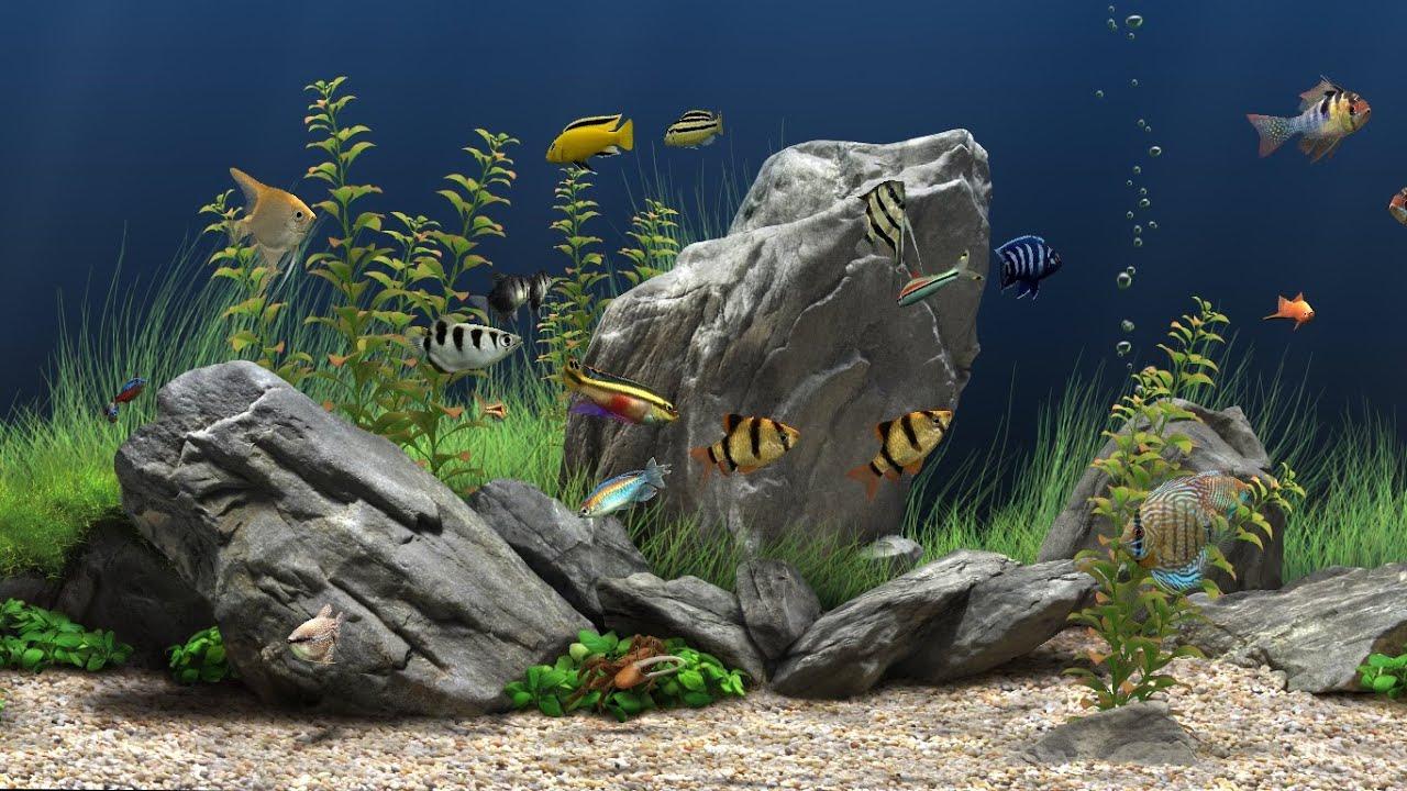 Animated Aquarium Wallpaper El Mejor Acuario Y El M 225 S Lindo Del Mundo🏷️ Bien
