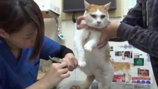 18歳老猫爪切りが嫌で唸る