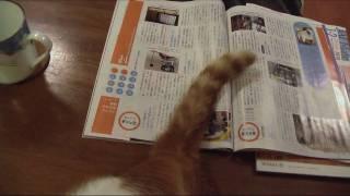 驚き!しっぽでページをめくる猫! My cat turns up page with Tail !