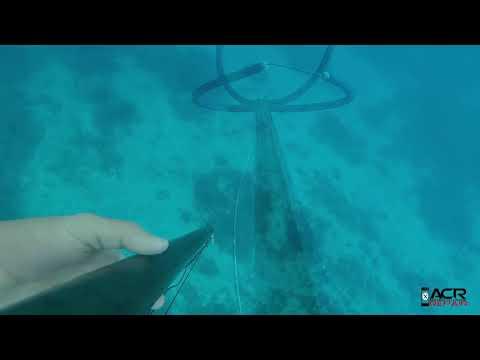 miami spearfishing 2017 after irma