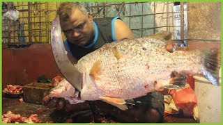 Coral Fish Cutting Into Small Pieces In Fish Market Bangladesh | Fastest Fish Cutter