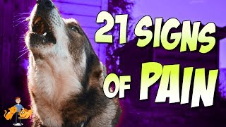 How To Tell If Your Dog Is In Pain (21 secret signs of pain in dogs)
