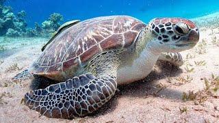 Sonhar com tartaruga ou jabuti significado espiritual