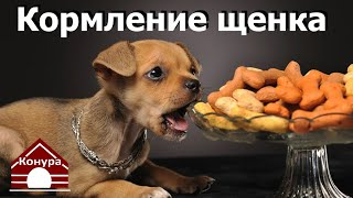 Как,чем и когда кормить щенка