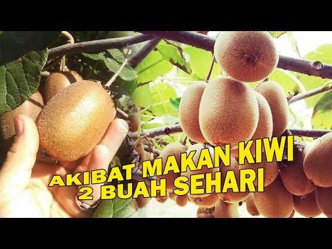 akibat-makan-2-buah-kiwi-setiap-hari
