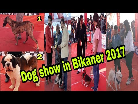 Dog Show in Bikaner 2017 Rajasthan India# MyCity DilSe