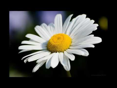 Тест : Сколько цветов на картинке ? =)