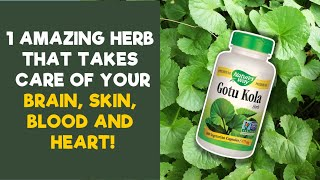 12 Amazing Health Benefits Of Gotu Kola