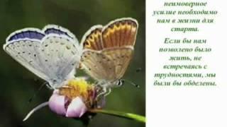 Как научиться летать - урок бабочки