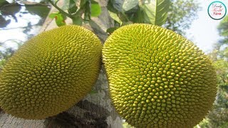 10 Surprising Health Benefits Of Jackfruit You Need To Know