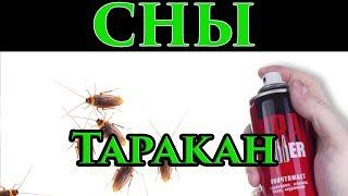Сон Таракан, насекомое во сне в ночь на воскресенье 🌙 - Маг Fose