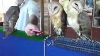 Хохма!    Совы танцуют рэп  Танцующие птицы(Самые смешные видео-ролики со всего интернета! Подписывайтесь на наш канал,смейтесь вместе с нами! если..., 2015-06-10T11:32:42.000Z)