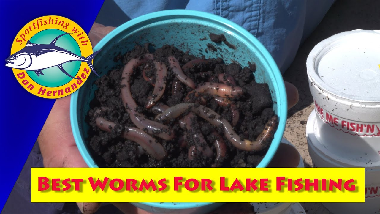 Best worms to use for lake fishing sport fishing youtube for Best worms for fishing