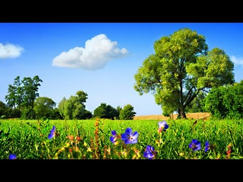 6 Hour Ambient Soundscape: British Countryside In the Summertime - Relaxing Nature Sounds