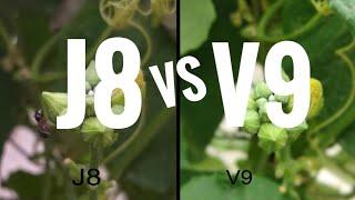 Samsung j8 vs Vivo V9 | camera comparasion