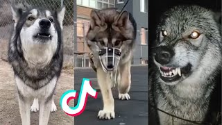 Wolves Are Badass And Cute | 2